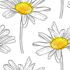 vector seamless pattern with flower of daisy
