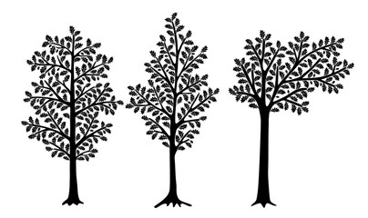 Set of stylized oaks isolated on white background. Vector illustration. Can be used for interior decoration