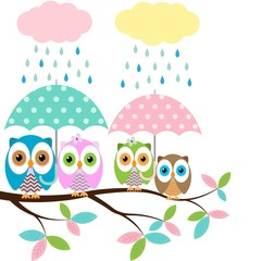 Four colorful owls with umbrella sitting on the branch on a white background