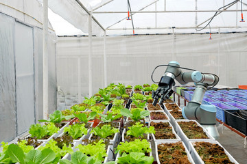 Modern organic farmhouse adopts the technology of robotic industry to apply for used in vegetable plots to work and help harvest on  concept of Smart Farming  4.0 and Industry 4.0. Fototapete