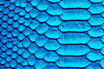 Wall Mural - Blue snake skin background, reptile