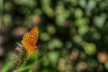 Top view of a orange and black butterfly against a green burred background.