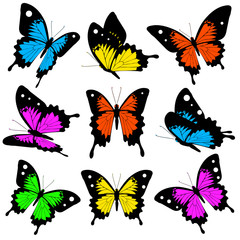 beautiful color butterflies,set, isolated  on a white
