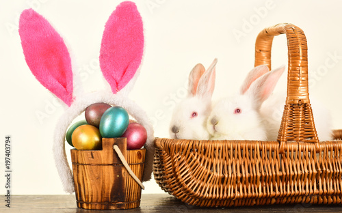 Easter eggs family cute bunny with funny bunny ears easter egg easter eggs family cute bunny with funny bunny ears easter egg ideas for happy family negle Gallery
