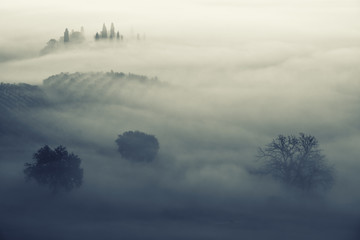 Beautiful foggy sunrise in Tuscany, Italy with separate trees under the fog. Natural misty background in minimalism style