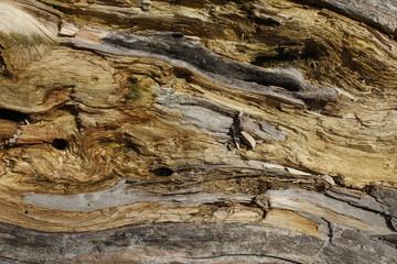 aşınmış ağaç dokusu yakın çekim