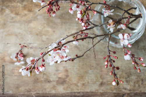 Close Up View Of Fresh Spring Tree Branches Blooming With Pink And