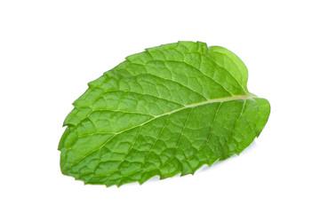 single fresh mint leaf isolated on white background