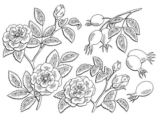 Dog rose flower berry plant graphic black white isolated sketch set illustration vector