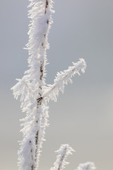 A frosty branch covered with snow