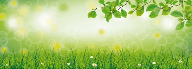 Spring Grass Beech Twigs Daisy Flowers Header