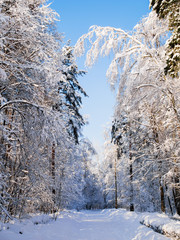 Photo of winter trees with snow and blue sky