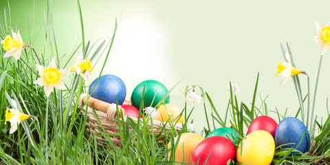 Poster, spring snowflake, narcissus, eggs  in the grass on a natrue background