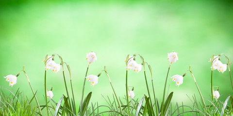 Poster, spring snowflake in the grass on a nature background