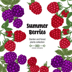 Hand drawn background with summer berries. Blackberry and raspberry branches isolated on white. Vector colored sketch illustration.