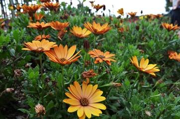 beautiful orange flowers blooming in botanic gardens