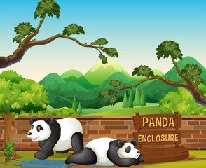 Two pandas in the opened zoo