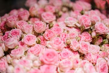 Background of a little beautiful pink roses