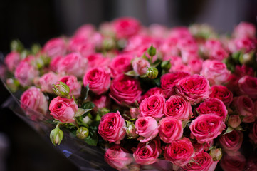 Background of a amazingly beautiful crimson pink roses