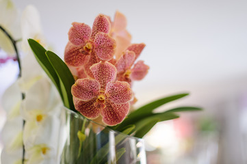 Beautiful pink dotted orchid in a vase