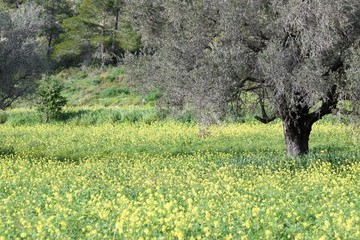 green summer field in northern Cyprus