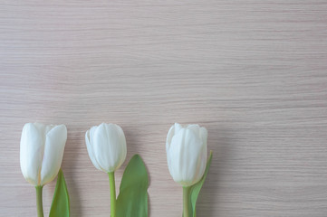 Three white tulips with green stems and sheets in a row at the bottom of the image.