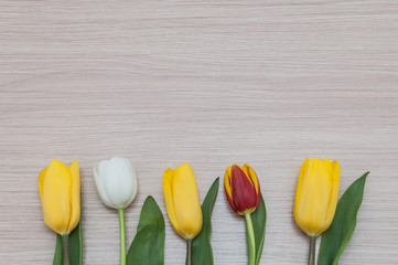 Three yellow, one white and one red tulip lie in a row on a background of wood.