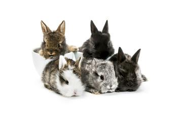 Tiny rabbits