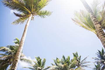 Sonnige Kokospalmen unter blauem Himmel