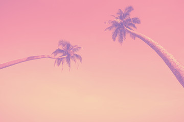 Trendy color toned two long tropical palm trees hang over the ocean beach