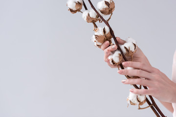 cropped view of tender hands with cotton plant, isolated on grey