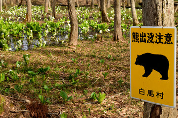 熊出没注意の看板 白馬村