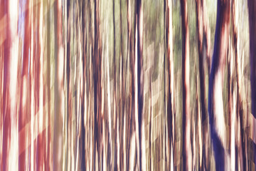 Motion blurred picture of trees, abstract background or wallpaper.