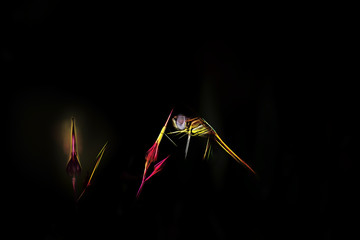 Stylized colorful dragonfly