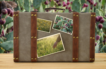 Image of old vintage luggage with nature photos over cactus plant background.