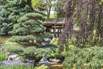 Kanada - Kasugai Japanese Garden Bonsaibäume