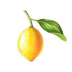 Lemon on a branch on a white background. Sketch done in alcohol markets