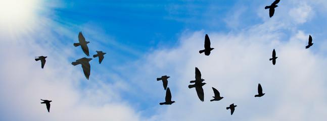 Silhouetten von Tauben vor blau-weißem Himmel