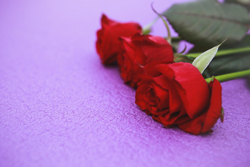 Red roses on purple background.