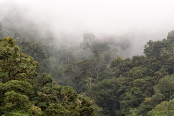 Nebelwald in den Bergen von Costa Rica