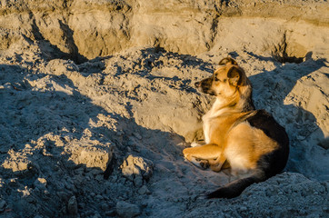Portrait of a dog lying on the sand