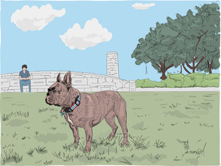 Adorable brown French Bulldog stands off leash in a park, with his owner far in the distance. Hand drawn illustration.