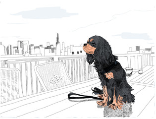 Adorable dog sitting on a table on a rooftop, with the Chicago skyline in the distance. Black and white except for the dog. Cavalier King Charles Spaniel. Hand drawn illustration.
