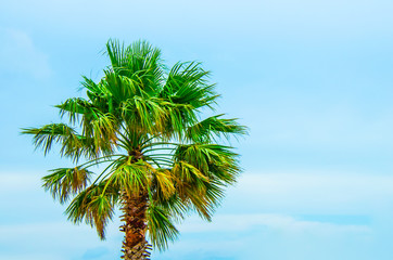Tropical palm tree with brilliant blue skies. Concept of scenic travel destination to warm sunny tropics.