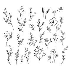 Hand drawn romantic flowers. Mono line vector floral collection.