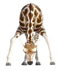 Cute Giraffe isolated on white. 3d render