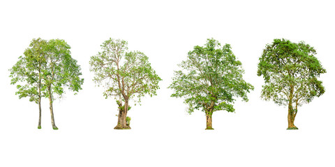 Set of tree shape and Tree branch on white background for isolated, Multiple tree on white background with clipping path.