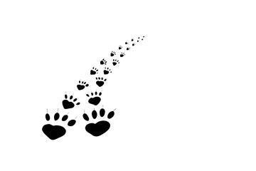 Traces of the animal leaving. Mammal paw prints on white background.