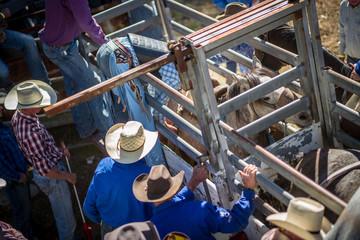 spectators at a Rodeo