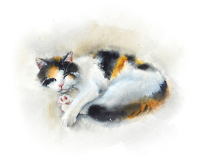 Sleeping domestic cat. Watercolor hand drawn illustration